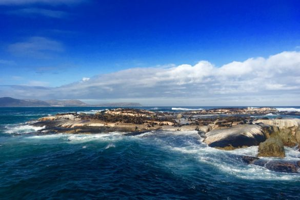 Carnet de voyage : Hout bay, Boulder's Beach & Cape Point