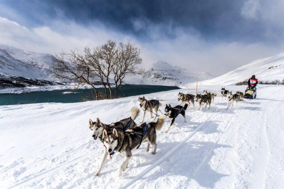 Alpina, chronométreur officielde La Grande Odyssée