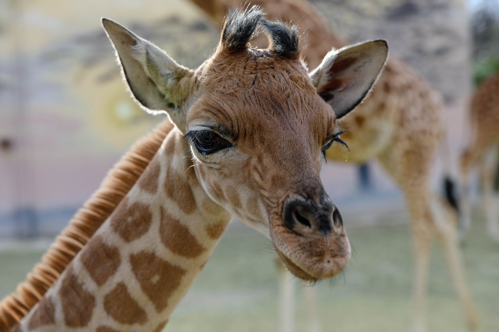 Il fait bon vivre au Zoo de La Flèche