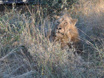 L'Afrique du Sud en famille avec African Trackers - Big Five