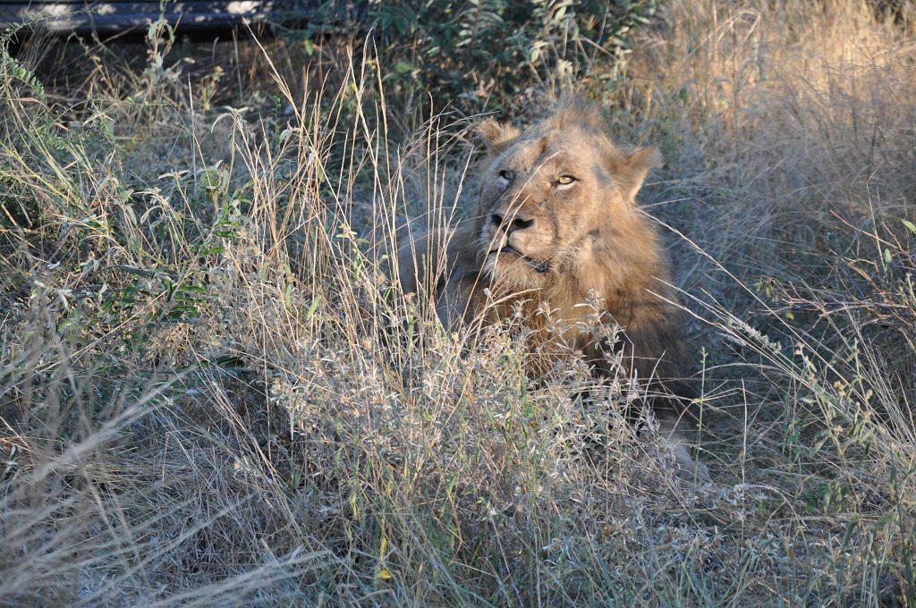L'Afrique du Sud en famille avec African Trackers – Big Five