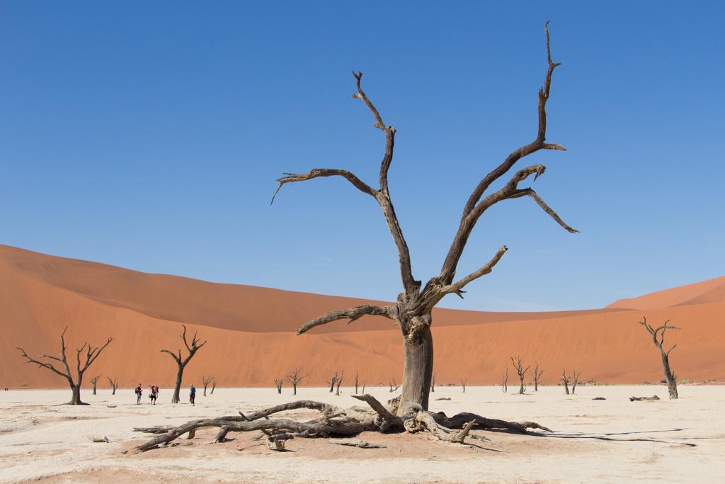 La Namibie avec African Trackers – J5