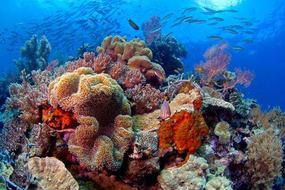 Awateha auSalon de la plongée 2020